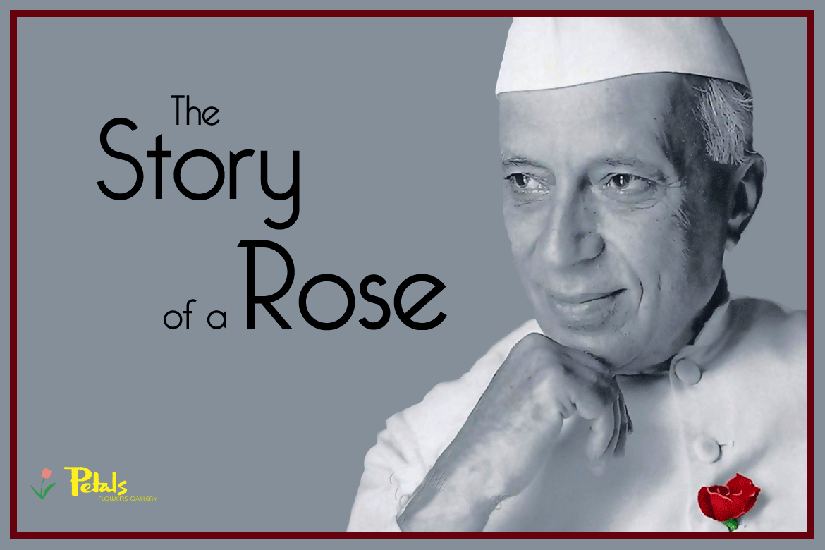 The Story Of  A Red Rose Dehradun